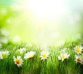 jarní louka s sedmikrásky. tráva a květiny hranice