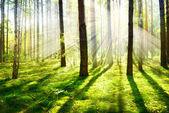 nebbia mattutina. foresta nebbiosa e nebbiosa