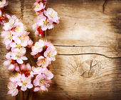 Photo Spring Blossom over wood background