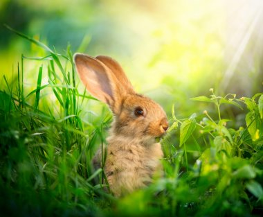 Rabbit. Art Design of Cute Little Easter Bunny in the Meadow