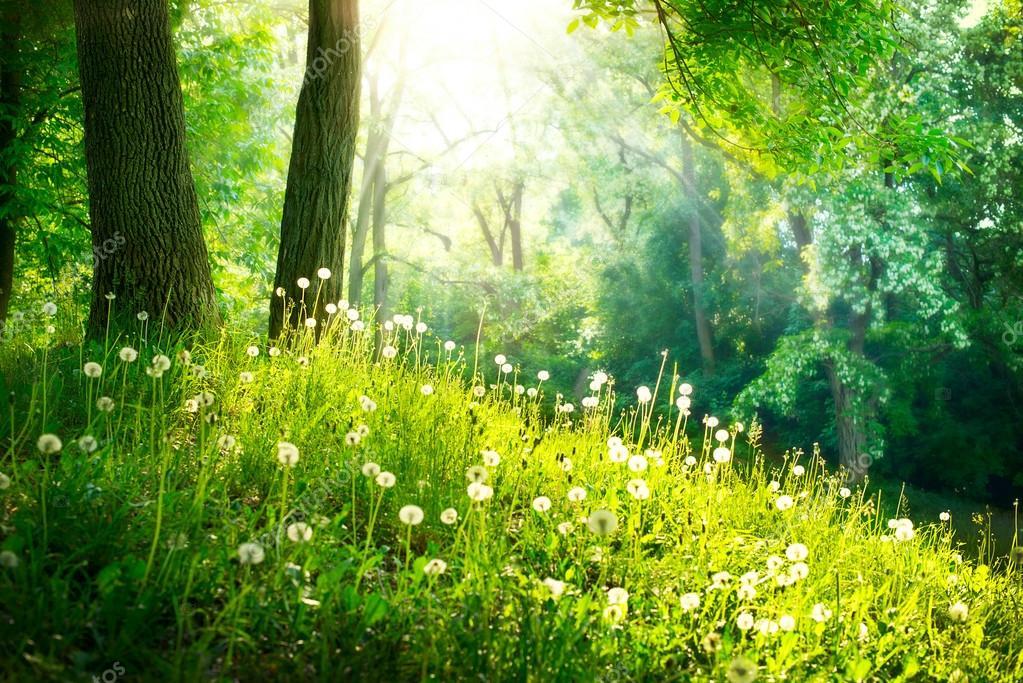 Фотообои Весной Природа. Красивый Пейзаж. Зеленая трава и деревья