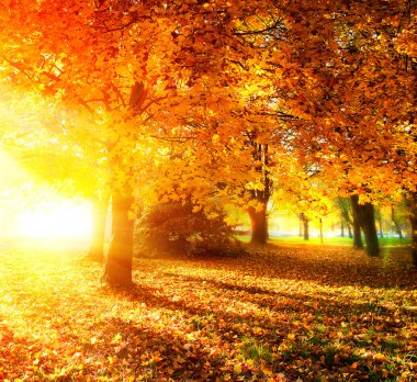 Fall. Autumnal Park. Autumn Trees and Leaves in Sunlight Rays