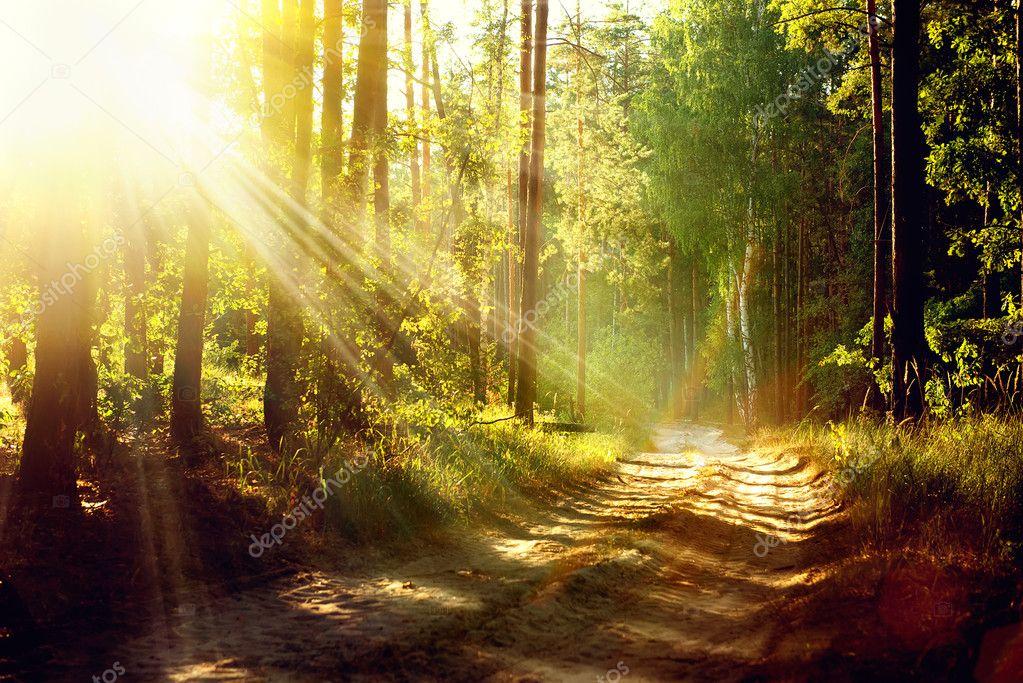 Фотообои Красивая сцена Мисти Старый лес с лучами солнца, тени и туман