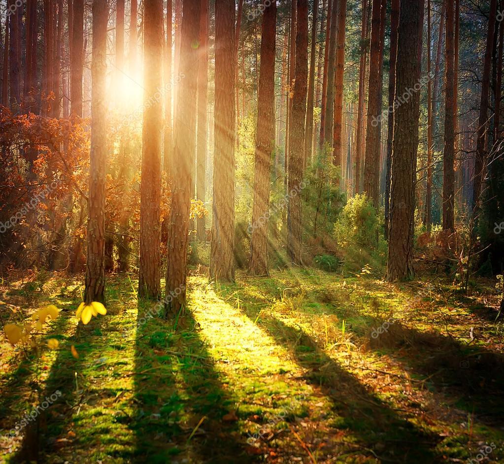 Фотообои Мисти Старый Лес. Осенний Лес