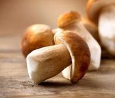hub Hřib dřevěné pozadí. podzimní houby cep