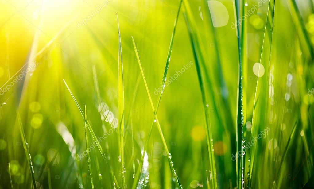 Fresh green grass with dew drops