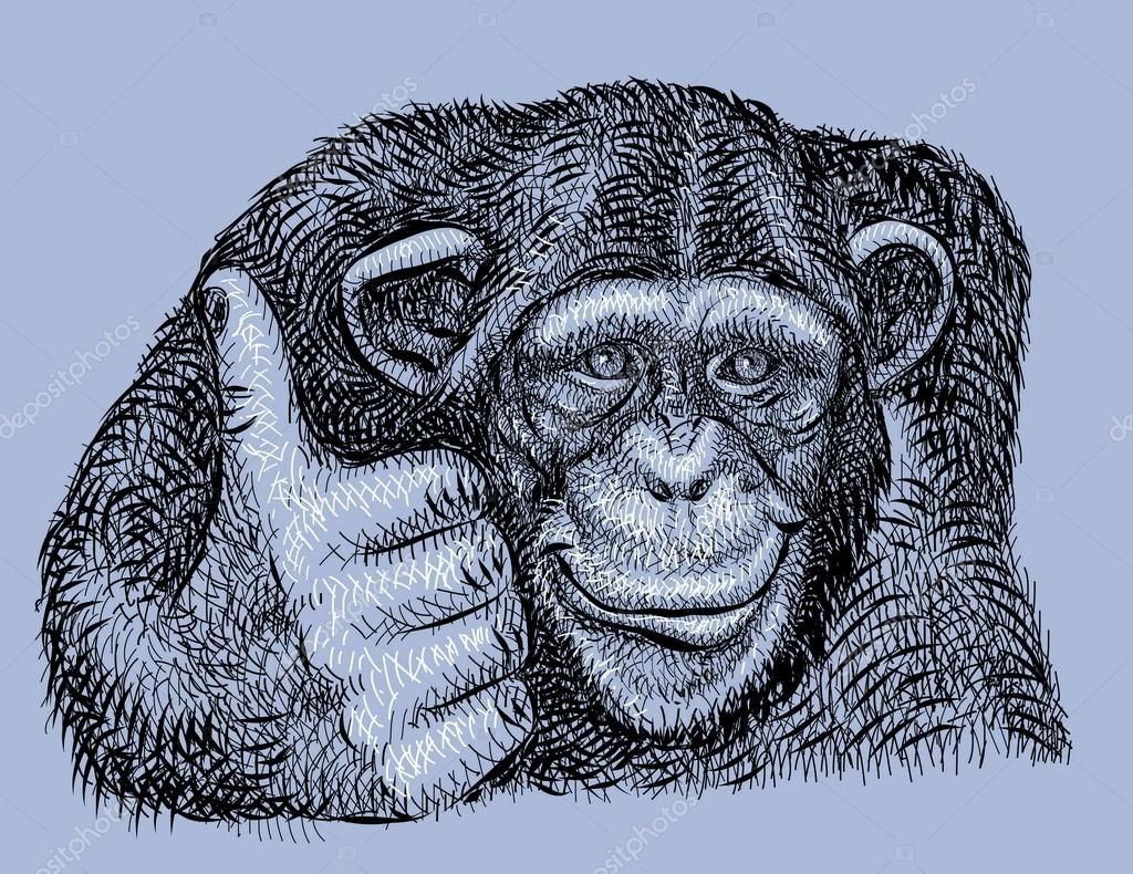 Chimpanzee drawing vector