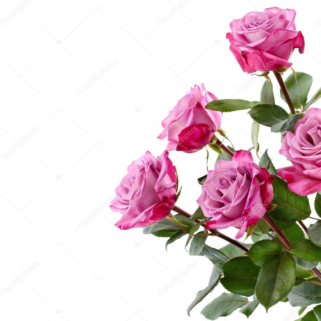 Purple Roses Bouquet On A White Background Stock Photo