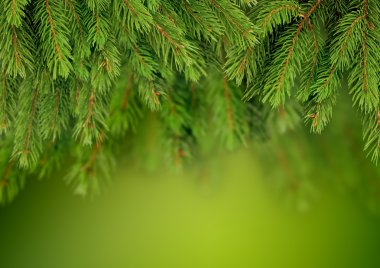 Branch of Christmas tree background