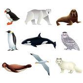 Fotografia animali artici vector set