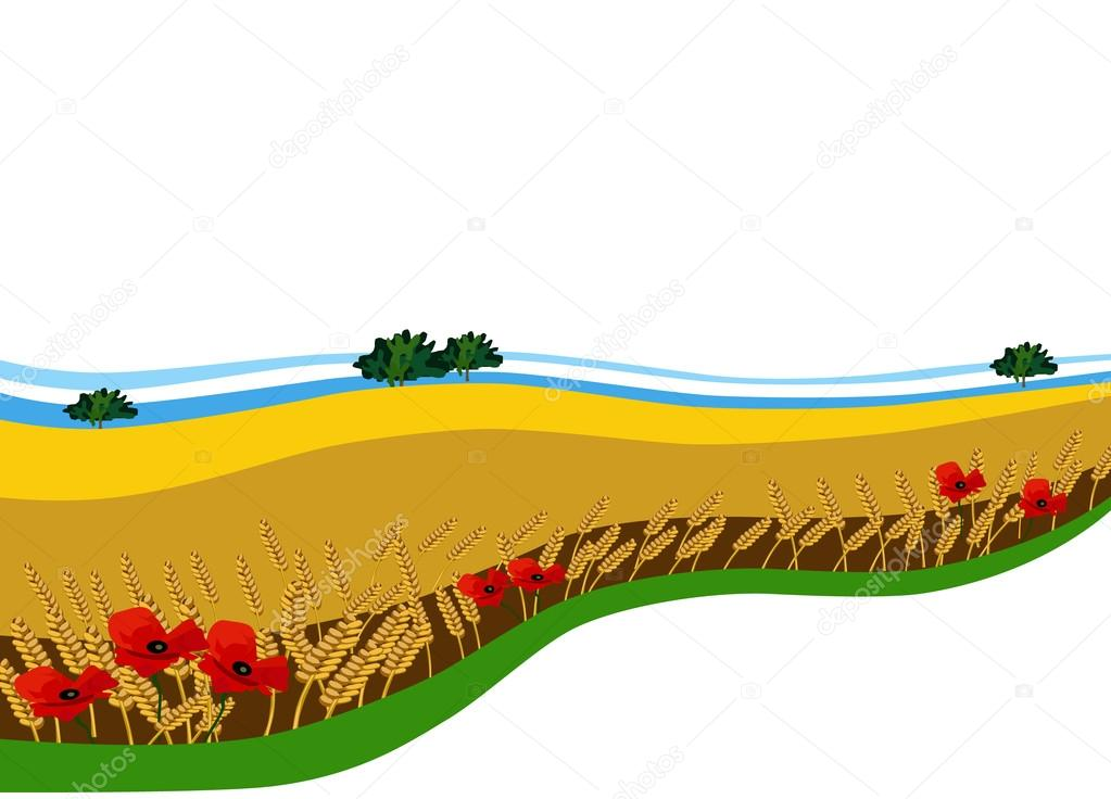Background (banner) with wheat field and poppies