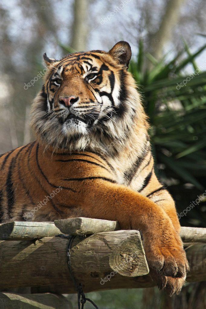 Tiger zoo lisbon