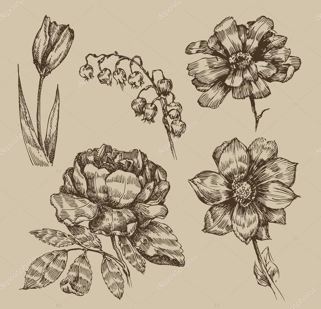 Ilustracion Ilustraciones De Flores Vintage Flores Vintage