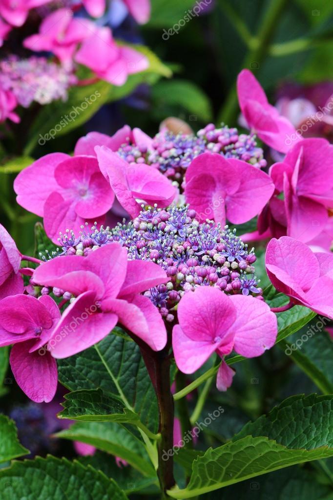 Flor De Lindas Flores Fotografias De Stock Supermurmel 12172259