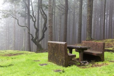Forest in the mist, Madeira, Portugal