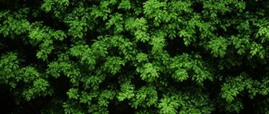 Natural green bush texture