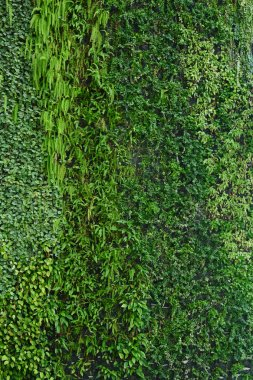 Vertical garden natural green leaf texture