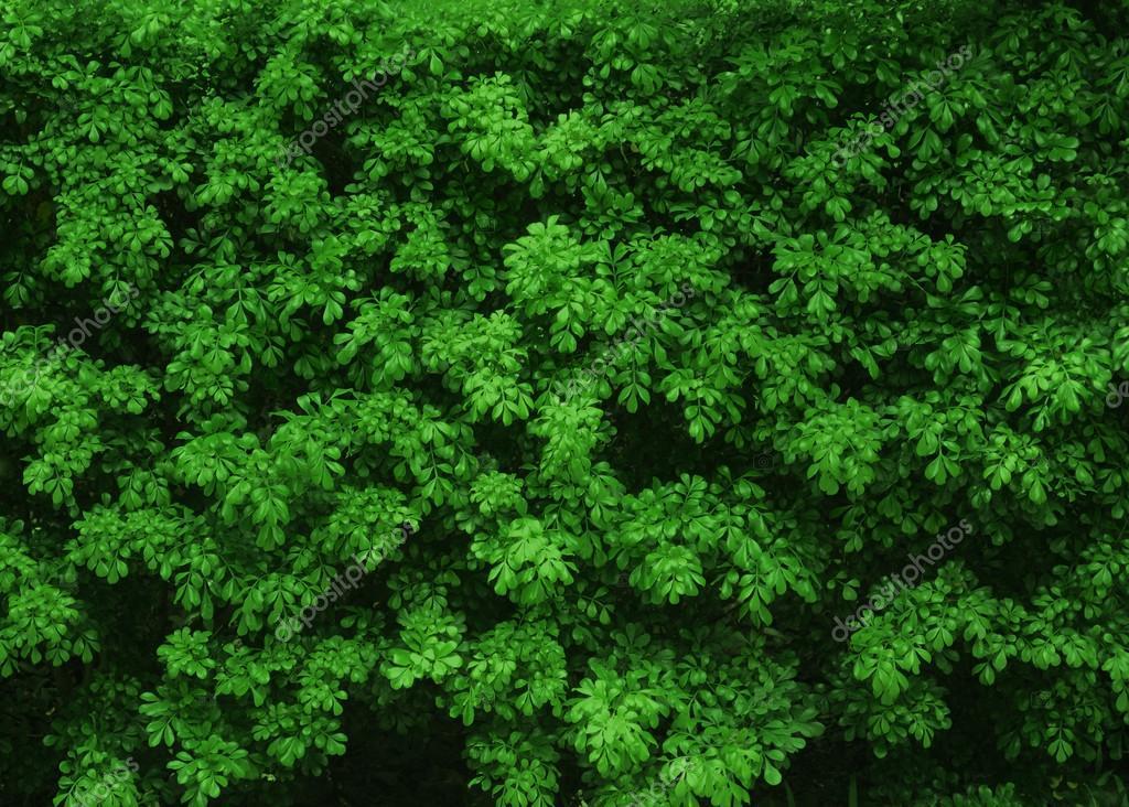 Teenbom.com = Jardim Vertical Textura ~ Design de imagem ...