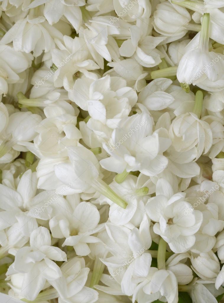 Imágenes Petalos De Flores Pétalos De Flores Blancas Foto De