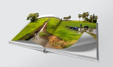 Open book in green rice fields