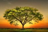 Zelený strom přírodní krajina