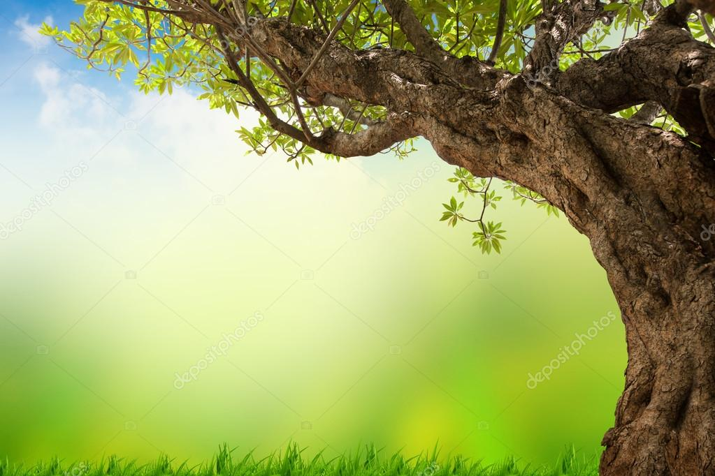 Фотообои Green tree nature landscape