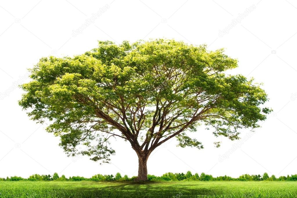 Фотообои Green tree nature landscape