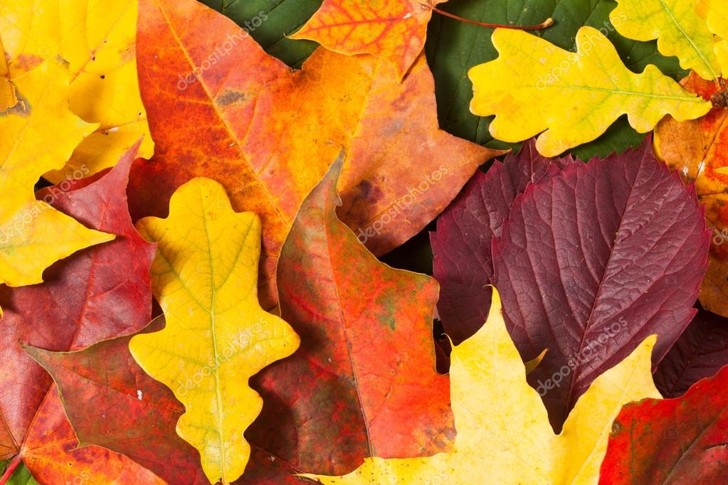 Wallpapers Autumn Leaves Hd Beautiful Autumn Leaves