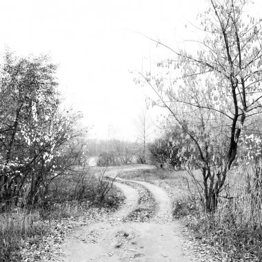 Black and white autumn landscape with graphical trees.