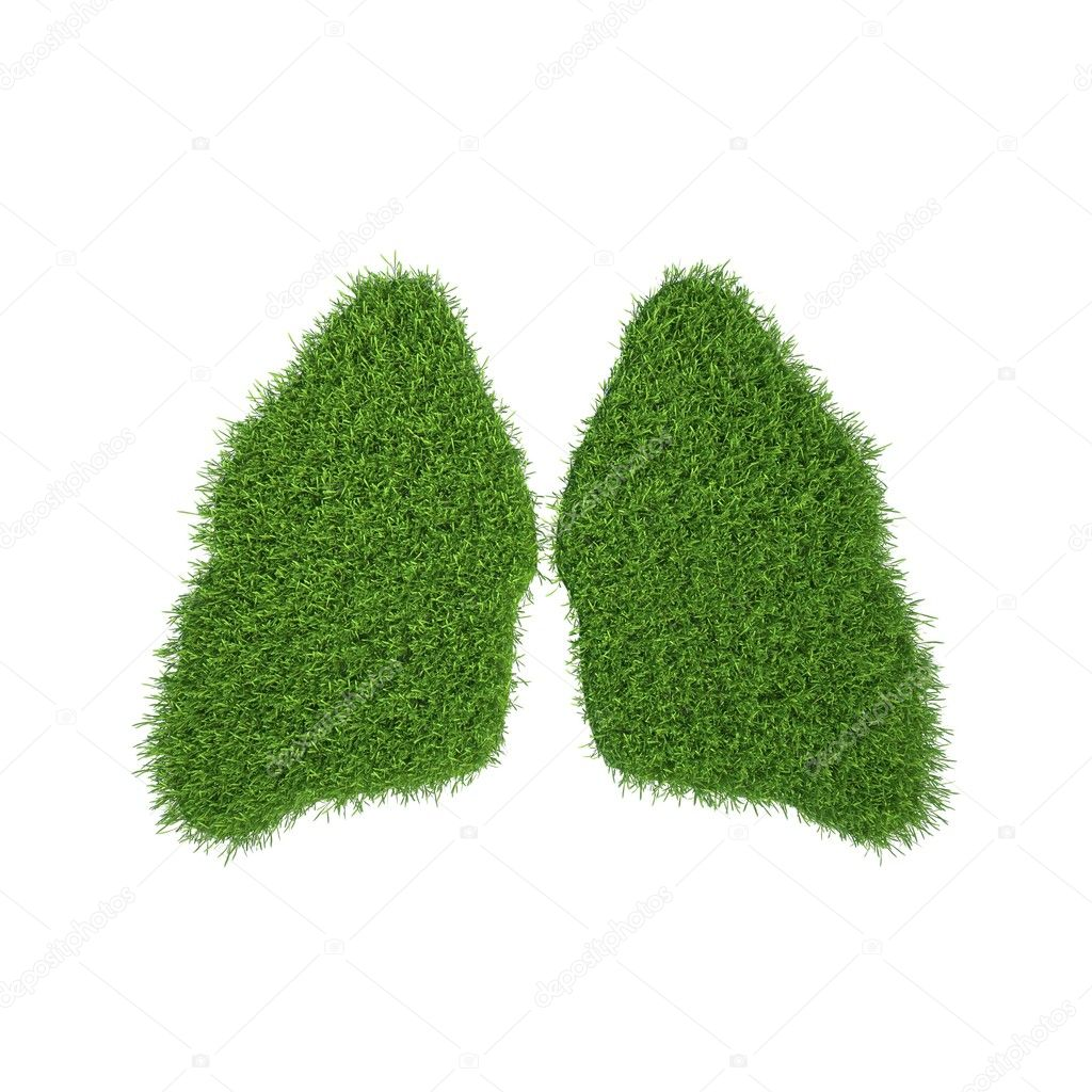 Green grass lungs in white background. 3d render