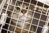 Fotografie Cat in a cage