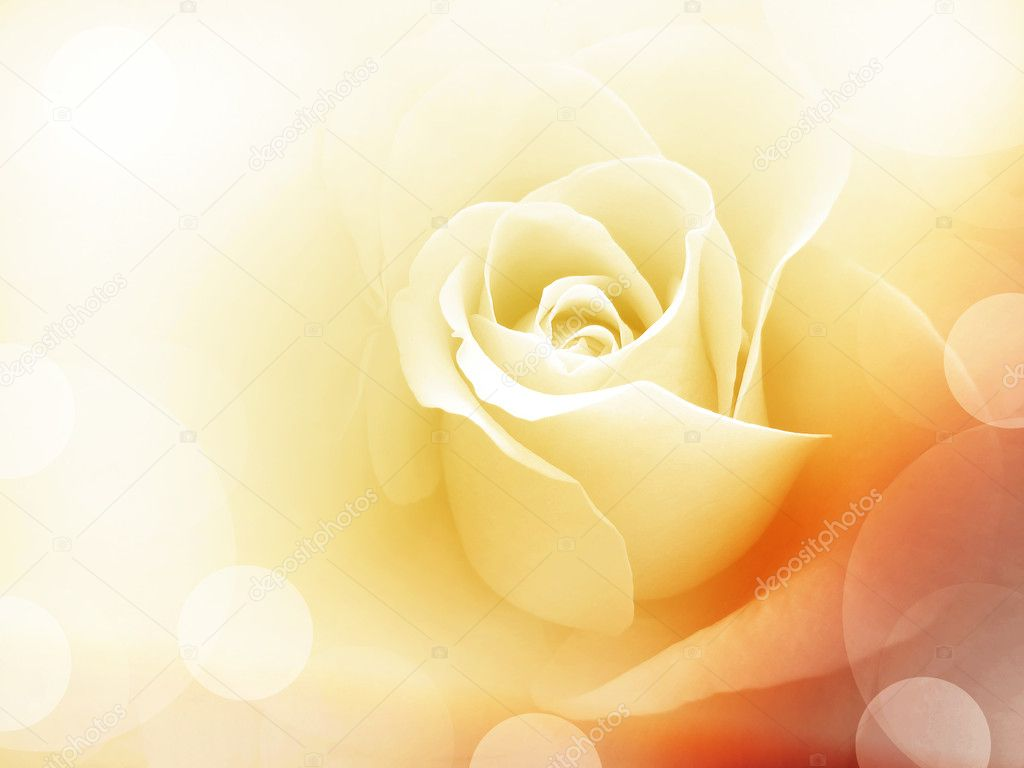 Roses Yellow Background Pics Stock Photos All Sites