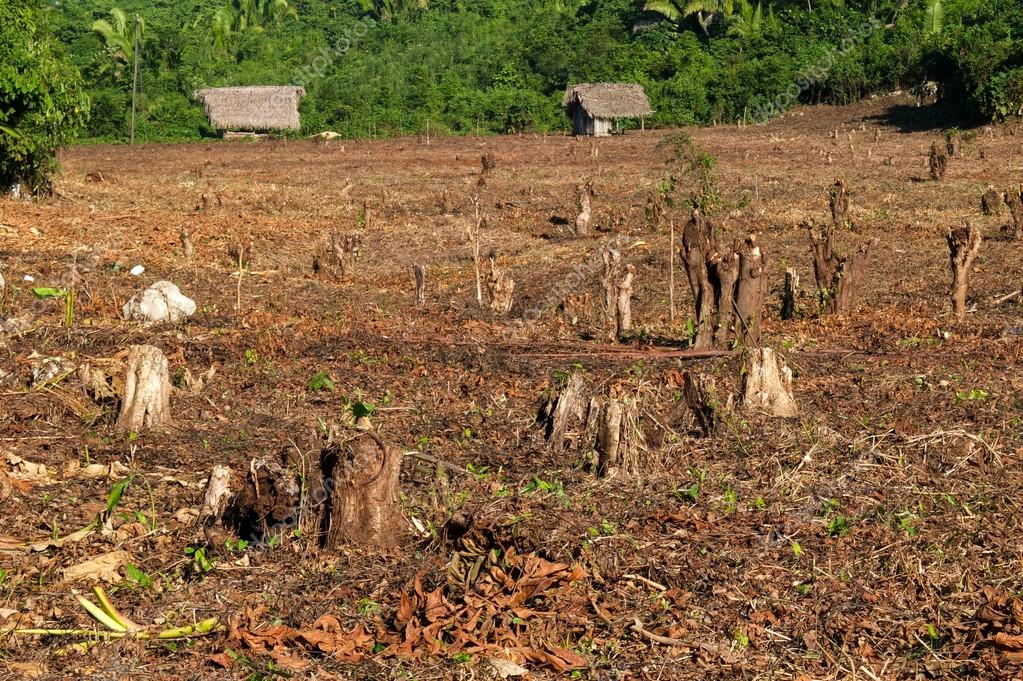 Destroyed tropical forest