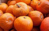 Photo pumpkin harvest