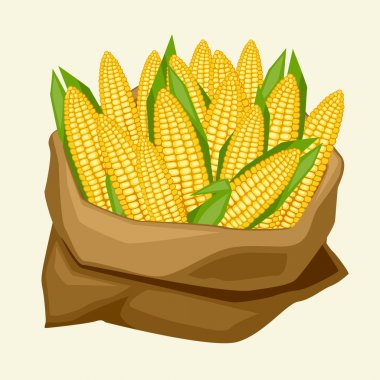 Illustration of stylized sack with fresh ripe corn cobs.