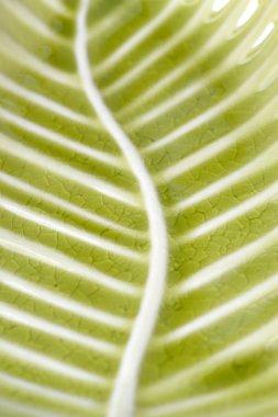 Platter green leaf texture