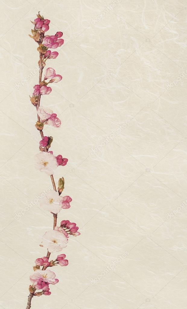 Fiori Vintage.Vintage Cherry Blossom Textured Image Stock Photo C Cumulus