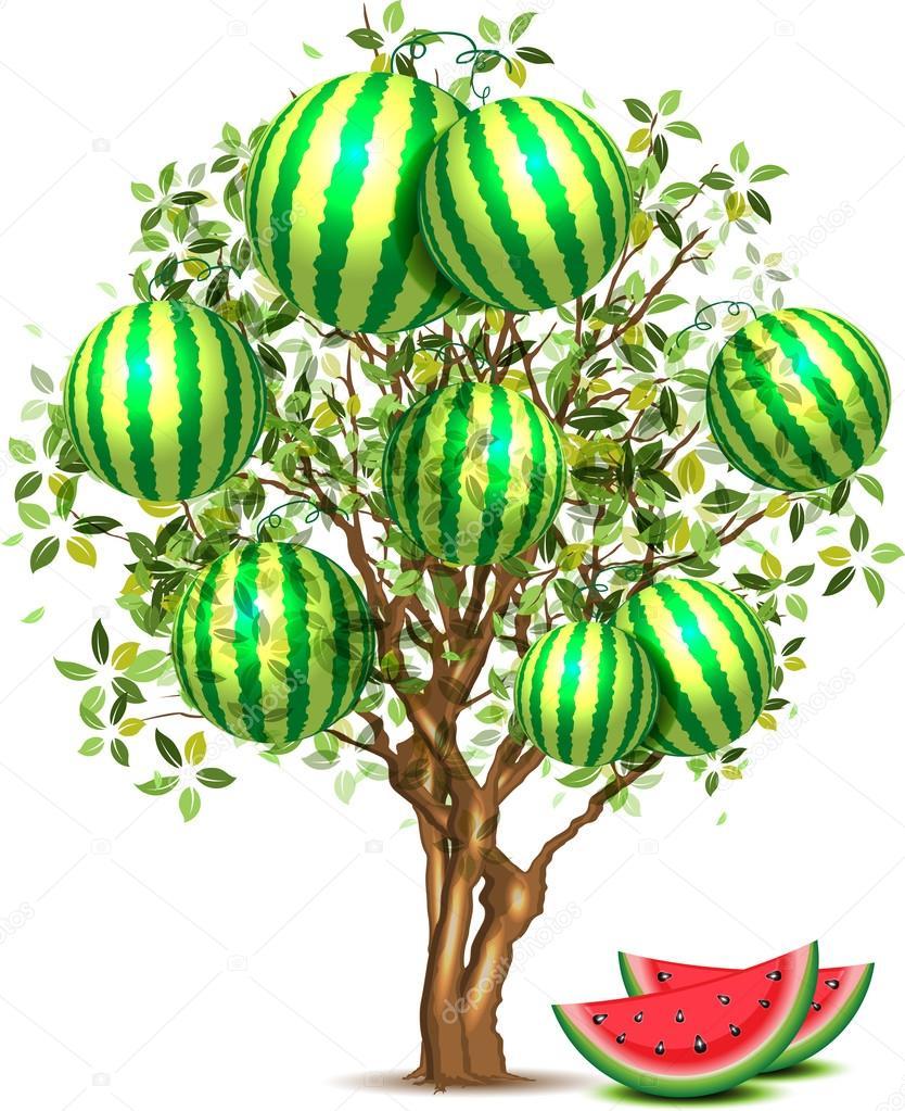 arbre de pastèque — image vectorielle 1001_holiday © #43311991