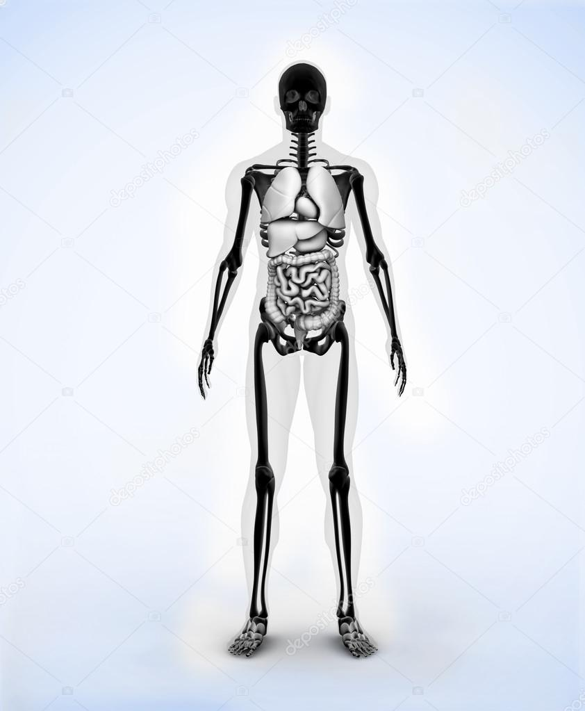 schwarz digitale Skelett — Stockfoto © Wavebreakmedia #24109421