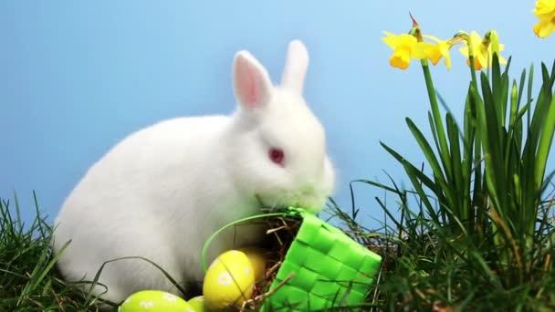 bunny rabbit sniffing around - photo #16