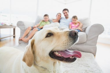 Happy family sitting on couch with their pet yellow labrador in foreground