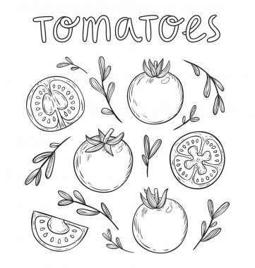 Sketched tomatoes