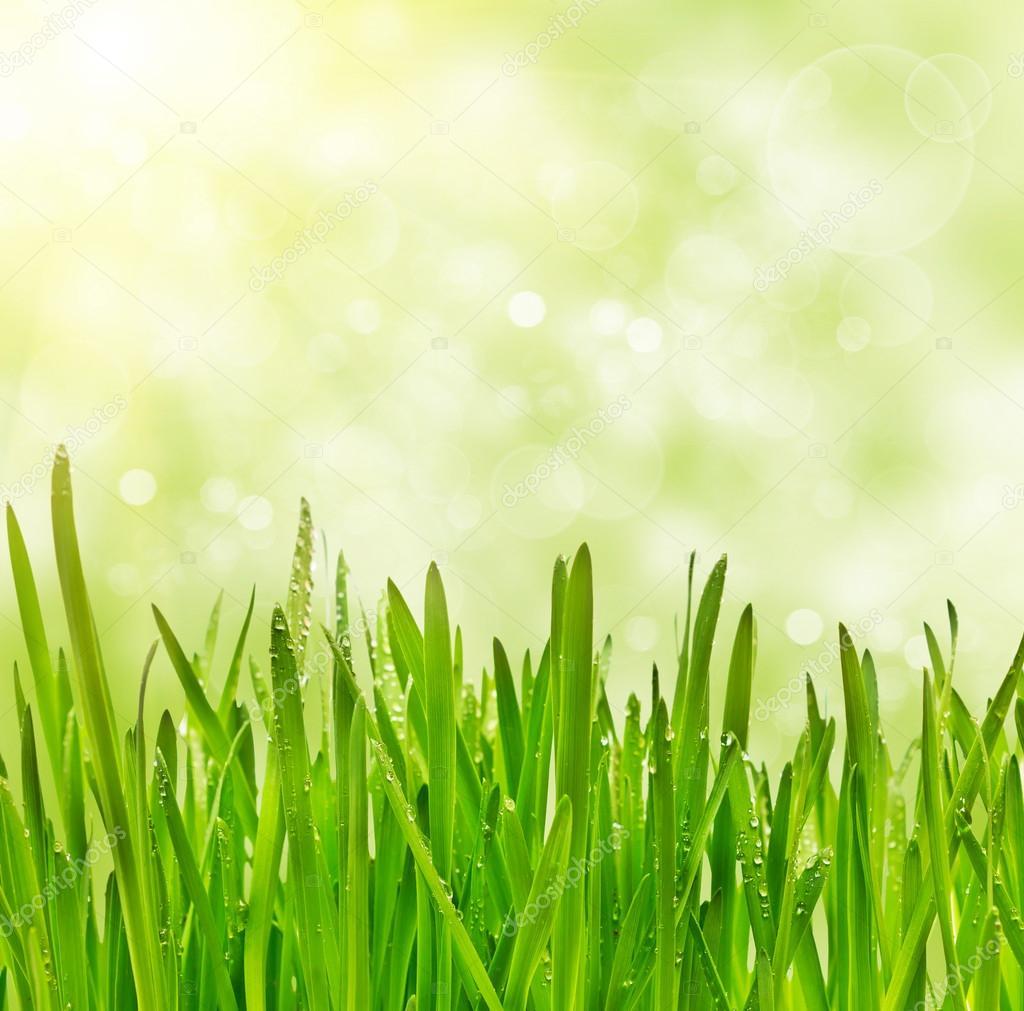 grass on bokeh background