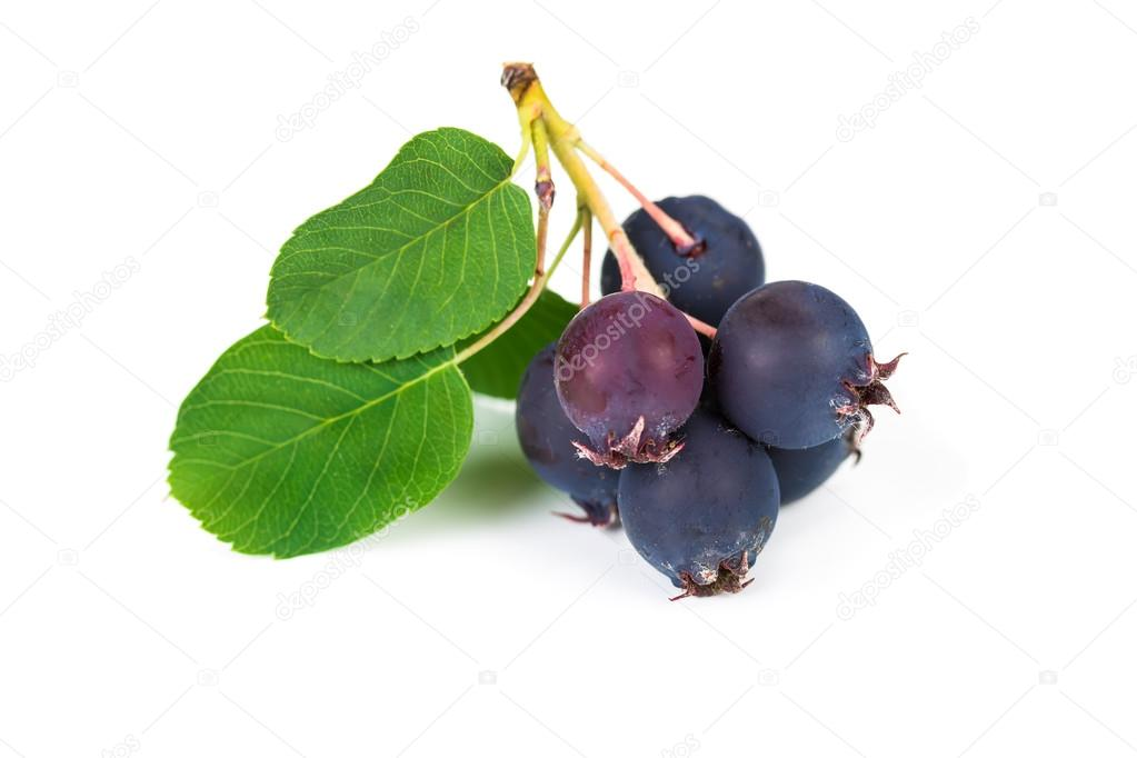 Forest berry blueberries