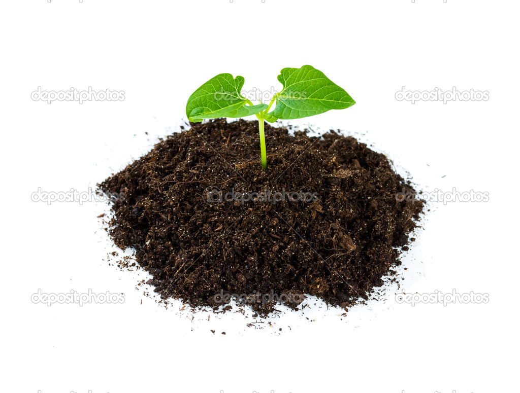 Heap soil with a green plant sprout
