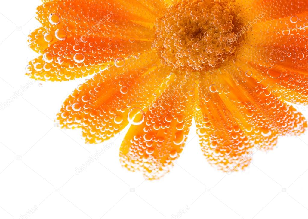 Marigold flower with bubbles water