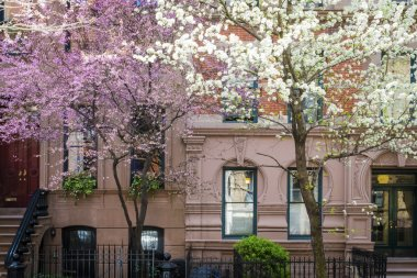 Blooming cherry trees outside of old New York apartment building