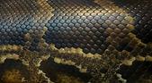 Fotografia pelle di serpente