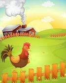 kohout na farmě