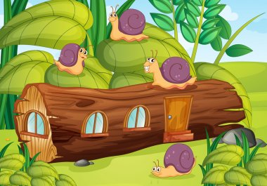 snails and house